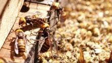 Krieg der Insekten Programm