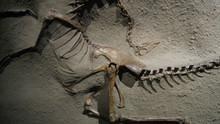 Dinotrampa mortal - TX- Serie