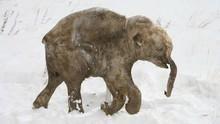 El despertar del bebé mamut Serie