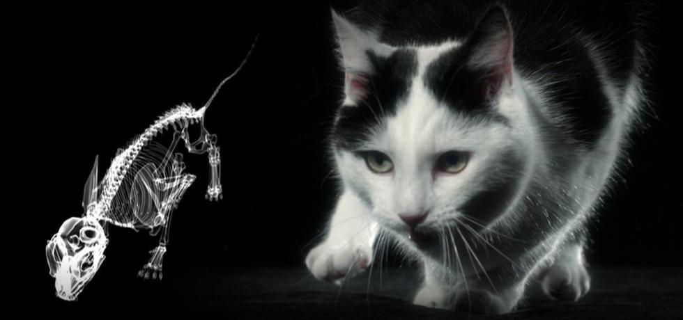 A macskák vad oldala