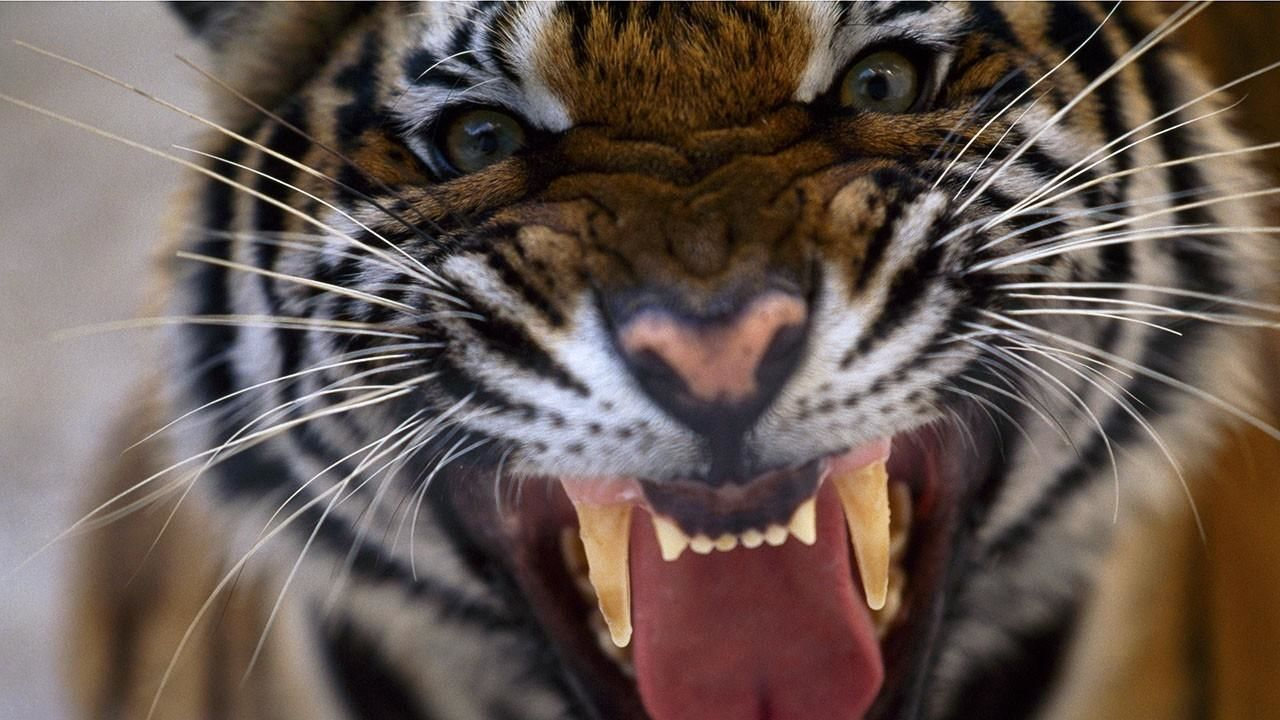 killer animals photos 20 animals that will kill you national