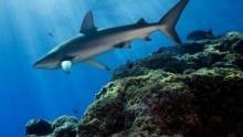 L'oasis aux requins Voir la fiche programme