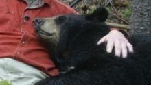 Vivre avec les ours Voir la fiche programme