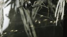 Bug attack Voir la fiche programme