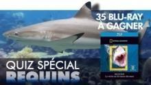 Quiz spécial requins Voir la fiche programme