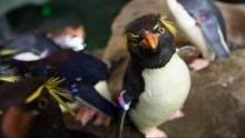 Building Penguin Paradise show