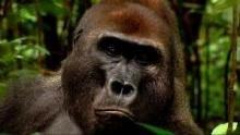 Дикая река Конго программа