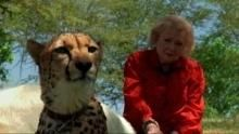 Betty White și felinele documentar