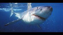 Gli squali più pericolosi del mondo programma