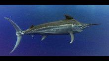 I pesci più veloci programma