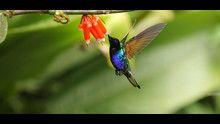 Nel magico mondo dei colibrì programma