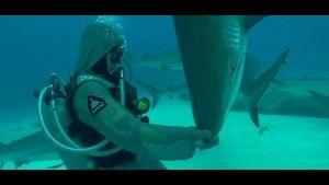 Gli squali più pericolosi