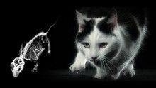 Sette vite da gatto programma