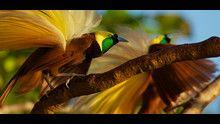 Le ali del paradiso con D. Attenborough programma