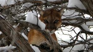 Puma Kurda Karşı SAYFAYA GİT