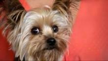 Cesar Millan: Doggie Nightmares Programma