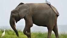 Sălbaticul Gabon documentar
