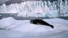 冰上霸主 Leopard Seal - Lords Of The Ice 節目