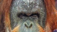 猿猴天才 Ape Genius 節目