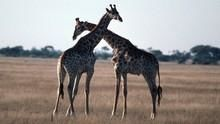 動物的情慾世界 Wild Sex 節目