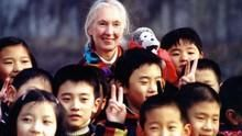 珍古德中國行 Jane Goodall:China Diary 節目