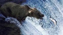 灰熊與狼的戰爭 Grizzly Cauldron 節目