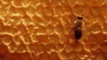 昆蟲戰役  Insect Wars 節目