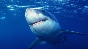 大白鯊終極檔案 Ultimate Shark
