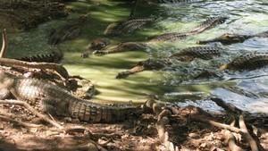 史前鱷勢力 When Crocs Ate Dinosaurs