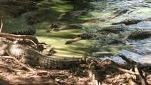 史前鱷勢力 When Crocs Ate Dinosaurs 節目