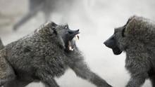 攝影心,動物情 Wildlife Photographers 節目