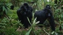 Königreich der Affen Programm