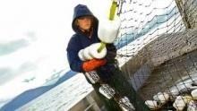 Balıkçı Kardeşler  SAYFAYA GİT