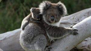Vahşi Yolculuk: Avustralya  SAYFAYA GİT