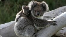 Wild Australia Program
