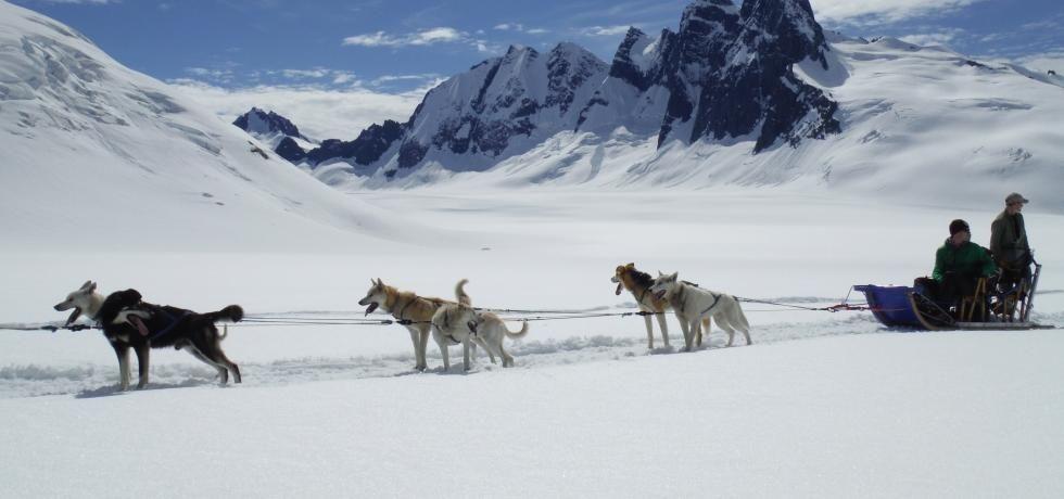 Ren overlevelse Alaska