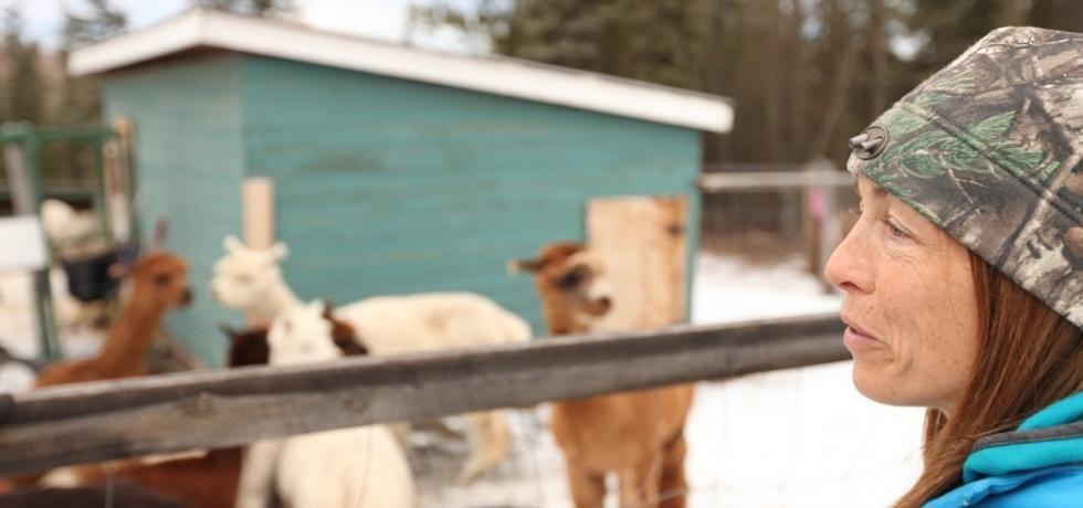 Yukonská veterinářka