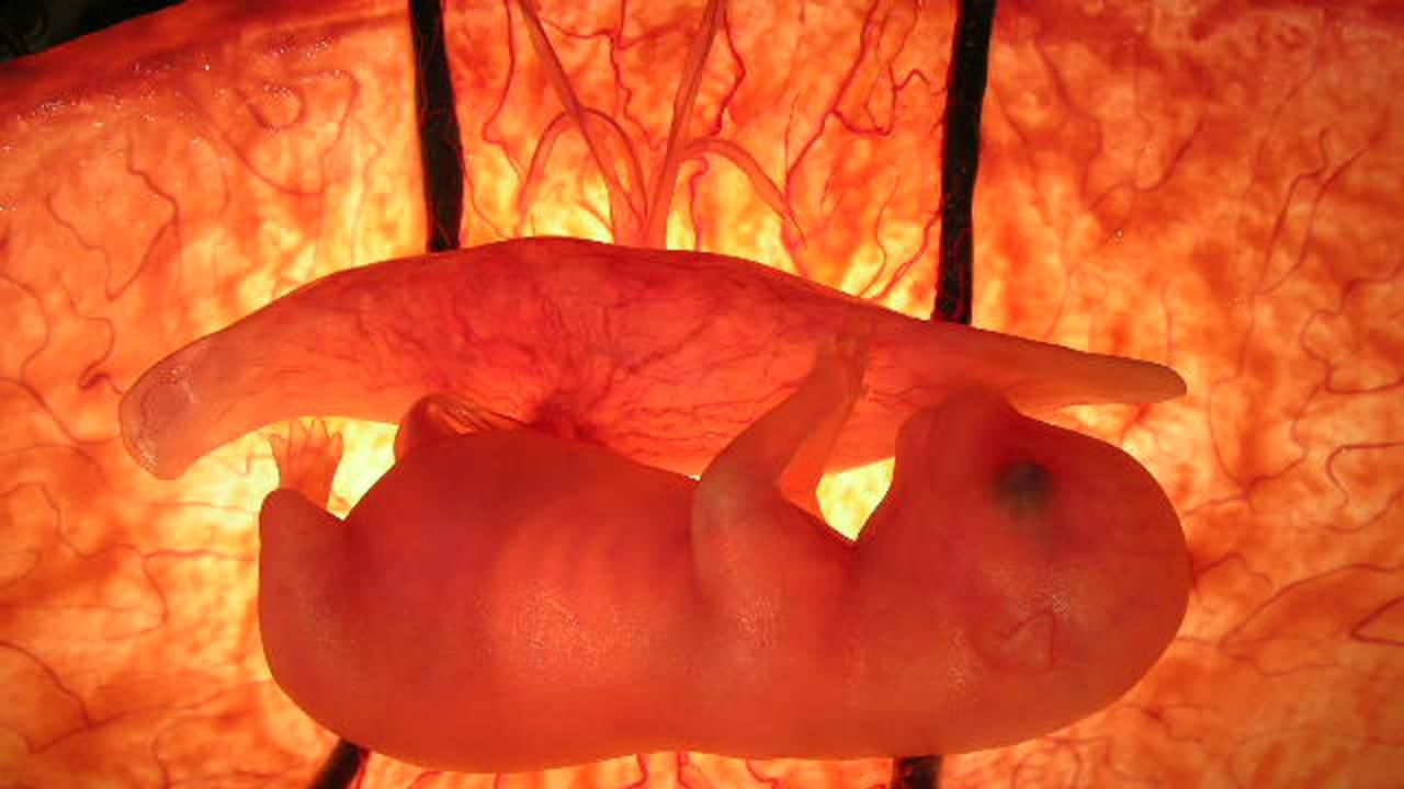 animals in the womb - photo #4