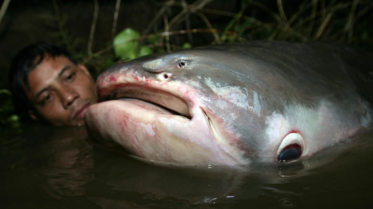 monster fish national geographic channel asia