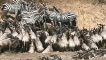 Les rives sanglantes d'Afrique Voir la fiche programme