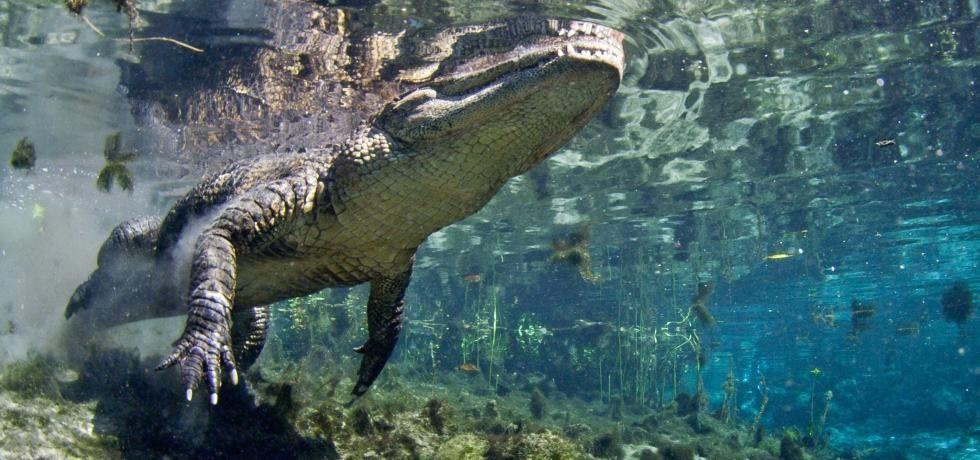 Destination Wild : Floride, au royaume des alligators