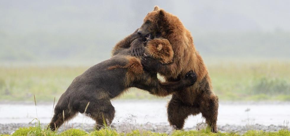 Animal Fight Club