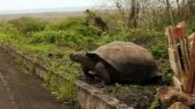 Access 360° World Heritage: Galapagos show