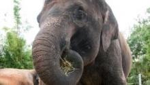 La face cachée des éléphants Voir la fiche programme