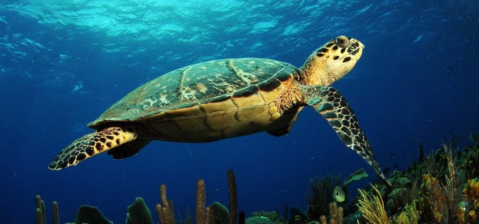 NIEUW: Marine Life