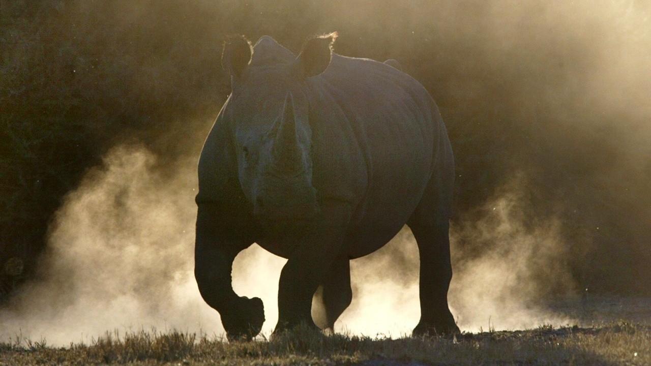 犀牛动物图片大全大片