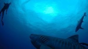 海洋綠洲 Underwater Oasis