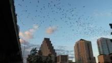 城市動物求生記 節目