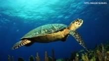 Marine Life Programma