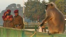 亞洲真風貌: 神牛神猴鬧印度 Divine Delinquents 節目